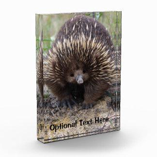 Australian Echidna Cute Animal Photo Award