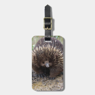 Australian Echidna Cute Animal Photo Bag Tag