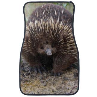 Australian Echidna Cute Animal Photo Car Mat