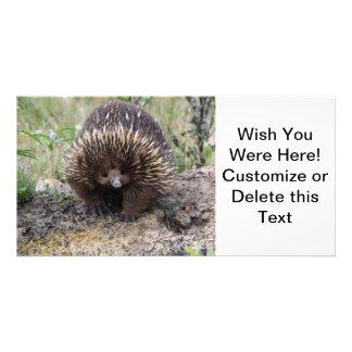 Australian Echidna Cute Animal Photo Card