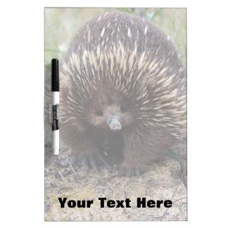 Australian Echidna Cute Animal Photo Dry-Erase Board