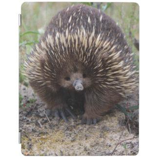 Australian Echidna Cute Animal Photo iPad Smart Cover