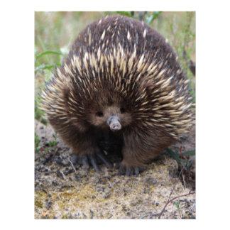 Australian Echidna Cute Animal Photo Letterhead