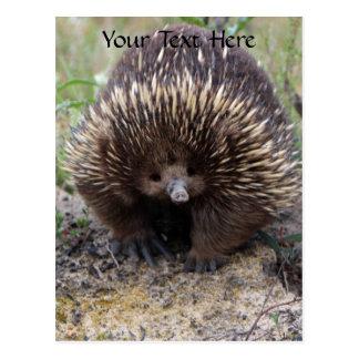 Australian Echidna Cute Animal Photo Postcard