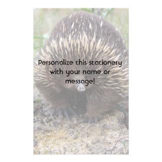 Australian Echidna Cute Animal Photo Stationery