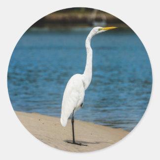 Australian Egret in Maroochydore Classic Round Sticker