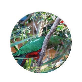 Australian Female King Parrot Porcelain Plate