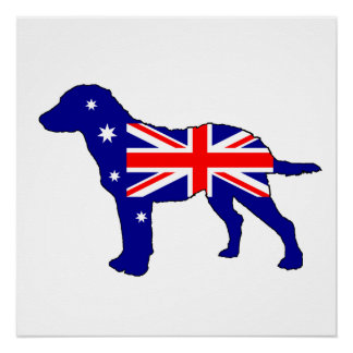 Australian Flag - Chesapeake Bay Retriever Poster