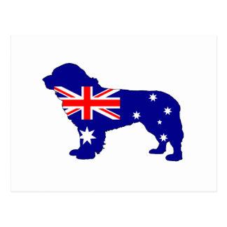 Australian Flag - Newfoundland Dog Postcard