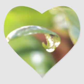 australian flora heart sticker