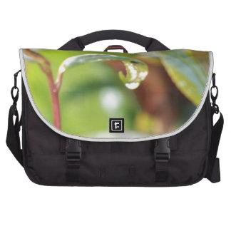 australian flora laptop commuter bag