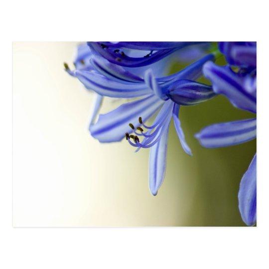 Australian Flower Postcard