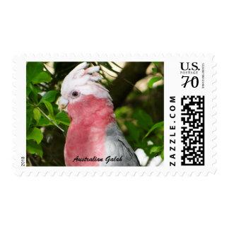 Australian Galah - Roseate Cockatoo 68c Stamp