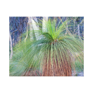 Australian Grass Tree Canvas Print