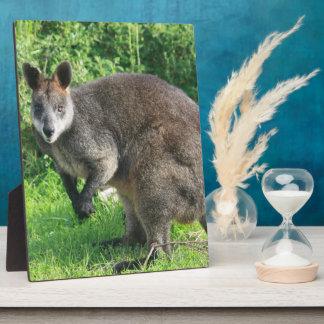 Australian Kangaroo Plaque