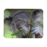 Australian Kangaroo  Premium Magnet Flexible Magnet