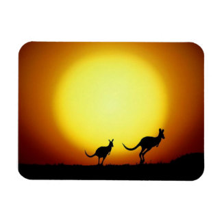Australian Kangaroos Silhouetted Against A Sunset. Magnet