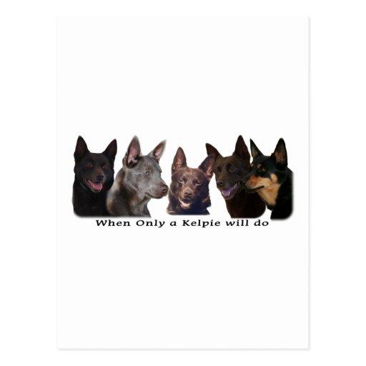 Australian Kelpies All Postcard