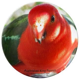 Australian King Parrot Porcelain Plates