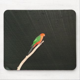 Australian King Parrot Mouse Pad