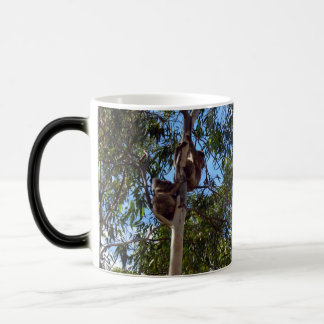 Australian Koala Bears Climbing Gum Trees, Magic Mug