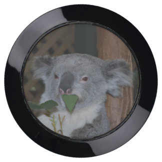 Australian Koala USB Charging Station