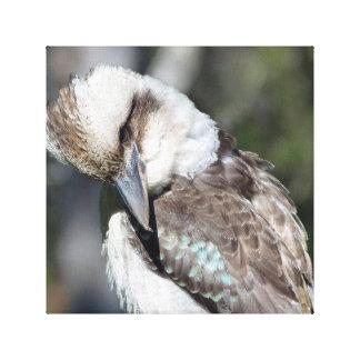 Australian Kookaburra Canvas Print