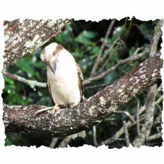 Australian Kookaburra Photograph Statuette