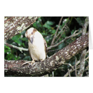 Australian Kookaburra Waiting For Food Greeting Card