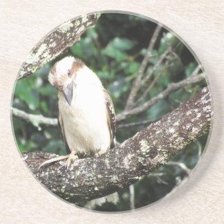 Australian Kookaburra Waiting For Food Drink Coaster