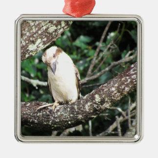 Australian Kookaburra Waiting For Food Metal Ornament