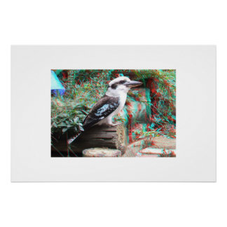 Australian Laughing Kookaburra 3D Anaglyph Poster