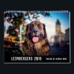 """Australian Leonbergers Calendar<br><div class=""""desc"""">Photos by Georgia Hogg</div>"""