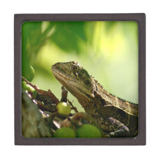 "Australian lizard hiding between leaves, 3"" Photo Keepsake Box"