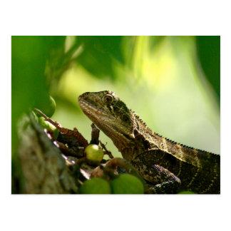 Australian lizard hiding between leaves, Photo Postcard