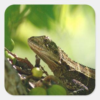 Australian lizard hiding between leaves, Photo Square Sticker