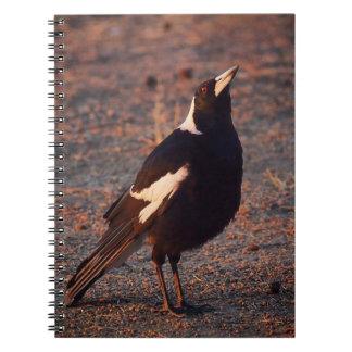Australian Magpie notebook