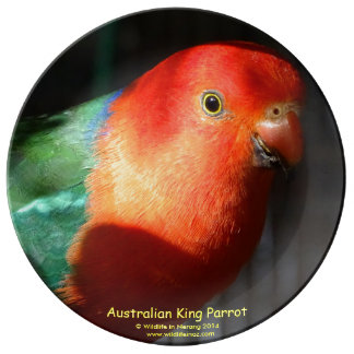 Australian Male King Parrot Porcelain Plate