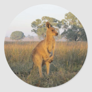 Australian Morning Product Range Classic Round Sticker
