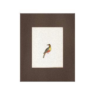 Australian Parrot Drawing Vintage Art Canvas Brown