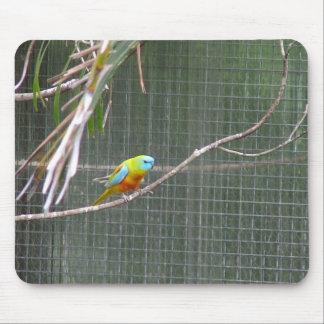 Australian Parrot Mouse Pad