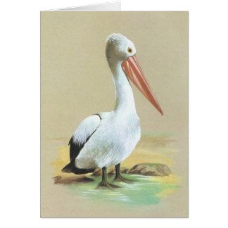Australian Pelican  - Pelecanus conspicillatus Card