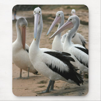 Australian Pelicans at Phillip Island Mouse Pads