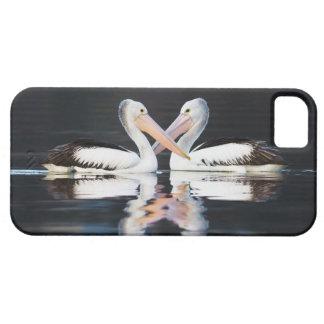 Australian Pelicans Pelecanus Conspicillatus iPhone SE/5/5s Case