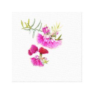 Australian Pink Gumnut FlowerWildflower Canvas Print