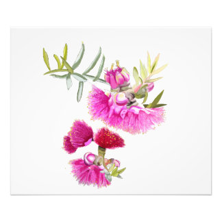 Australian Pink Gumnut FlowerWildflower Photo Print