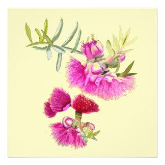 Australian Pink Gumnut Gum Flower Print