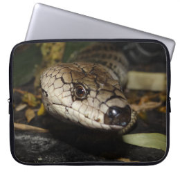 Australian Pink Tongue Lizard Laptop Sleeve