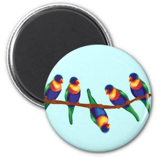 Australian rainbow lorikeets 2 inch round magnet