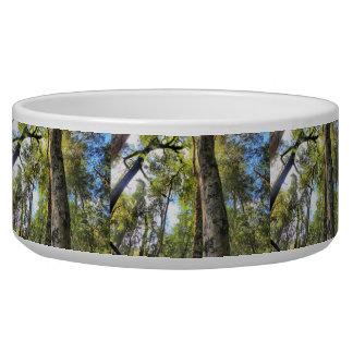 Australian Rainforest Eucalyptus Gum Trees Bowl